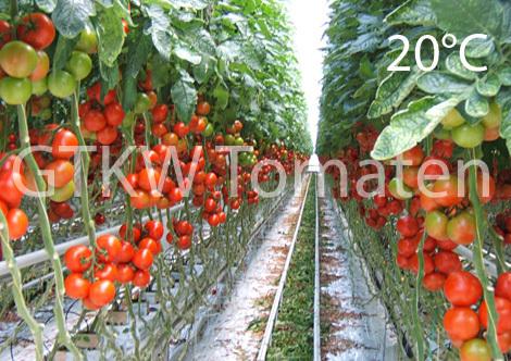 Kommission Endlager / Die Tomate ist der Beweis das es funktioniert ...